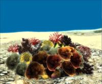 obj corals pack