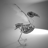 3d bird skeleton model