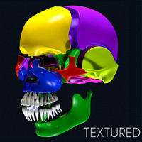 3d anatomy skull color parts