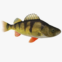 perch fish max
