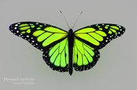 monarch green 3d c4d