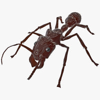 maya bullet ant fur