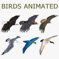 Birds (ANIMATED)