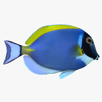 ma powder blue tang