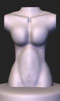 3d female human torso