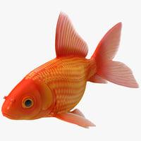 3dsmax goldfish 1