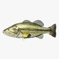 3d model of bass largemouth fish
