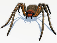 3d female spider phoneutria