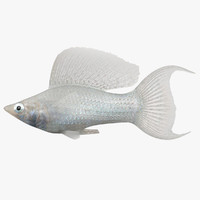 realistic molly lyretail sailfin 3d model