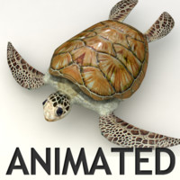 Sea Turtle Animated