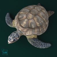 3d turtle animal amphibian