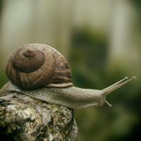 3d realistic snail model