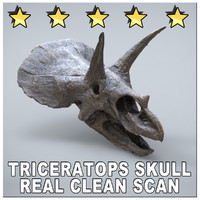 TRICERATOPS SKULL MUSEUM SCAN