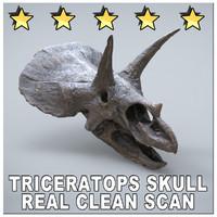 3d scan triceratops skull museum model