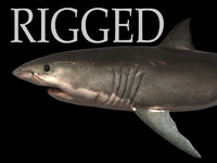 3d realistic shark rigged white