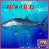 bluefin tuna 3d max