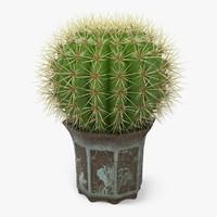 3d model cactus plant