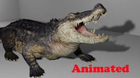 alligator animal video 3d model