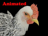 3d model chicken animal video