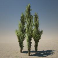 3d model cypress tree