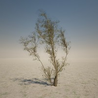 3d model brown desert tree