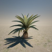Short Date Palm Tree