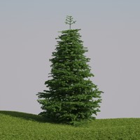 abies fraseri tree max