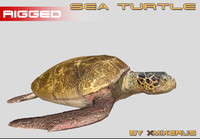 realistic turtle rigged 3d model