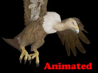 buzzard animal 3d