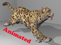 3d cheetah animal video