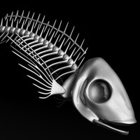 fish skeleton animal obj