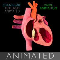 3d model open heart section animation