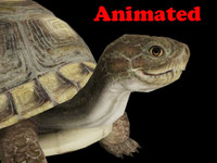 turtle animal video 3d fbx