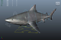 shark 3d ma
