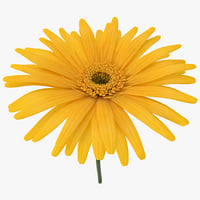 yellow daisy 3d c4d