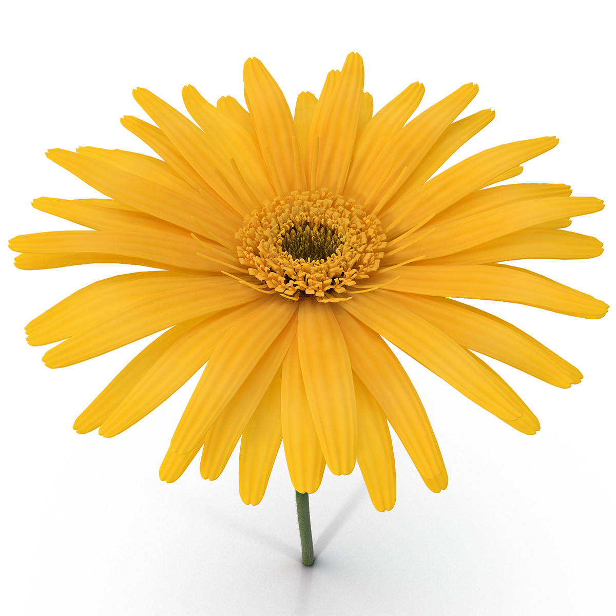 Yellow_Daisy_007.jpg