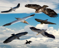 3d birds flying