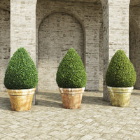 3d shrubs pots 2 model