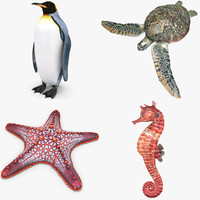 aquatic animal set penguin max