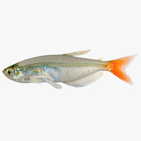 3ds max realistic glass bloodfin tetra