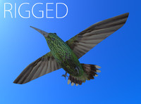 rigged humming bird 3d model