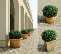 3d bushes set model