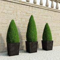 candle-shaped bushes 3d model