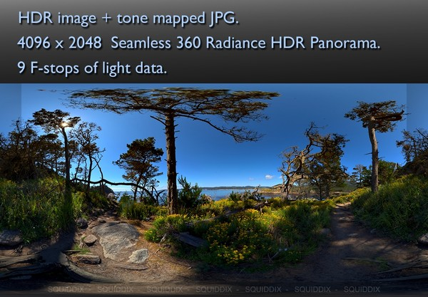 PATH THROUGH PINE FOREST LOS LOBOS CALIFORNIA  360 HDR PANORAMA #482