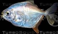 fluorescent fish.jpg