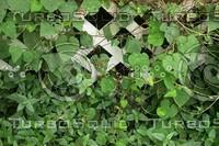 green vines.jpg
