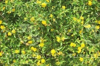 little yellow flowers.jpg