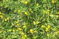 little yellow flowers.jpg
