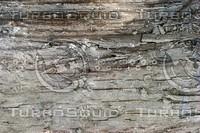 rotten wood.jpg