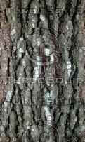 large gray bark.jpg